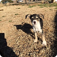 Adopt A Pet :: Asher - Snyder, TX