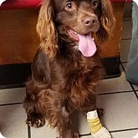 Adopt A Pet :: Houston - Los Angeles, CA