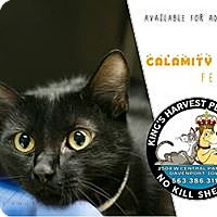 Adopt A Pet :: Calamity - Davenport, IA