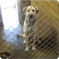 Adopt A Pet :: Scrappy --URGENT - Upper Fairmount, MD