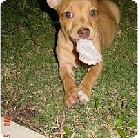 Adopt A Pet :: Ernie - Pembroke Pines, FL