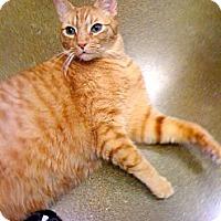 Adopt A Pet :: Dickens - Irvine, CA