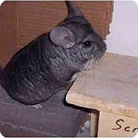 Adopt A Pet :: Joey - Avondale, LA