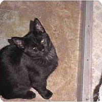 Adopt A Pet :: Phoenix - Warren, MI