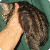 Adopt A Pet :: Monster - Dallas, TX