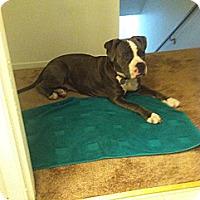 Adopt A Pet :: Maddie - Santa Monica, CA