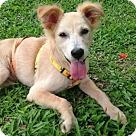 Adopt A Pet :: Gooseberry