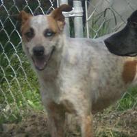 Adopt A Pet :: Kyli - Manchester, TN
