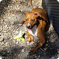 Adopt A Pet :: Zena - Palmetto Bay, FL