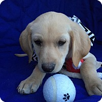 Adopt A Pet :: Oman-pending adoption - Manchester, CT