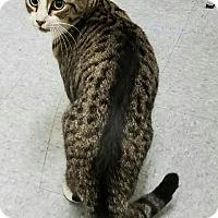 Adopt A Pet :: Harper - Albany, NY