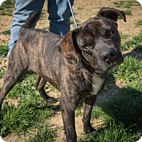 Adopt A Pet :: Sammy - Jasper, AL