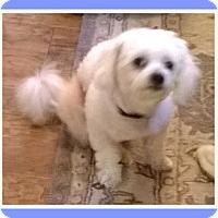Adopt A Pet :: Pending!!Rocco - SE TX - Tulsa, OK