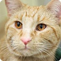 Adopt A Pet :: Armand - St. Paul, MN