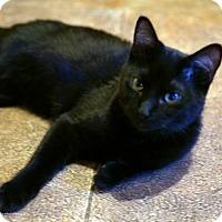 Adopt A Pet :: Astro - Tucson, AZ