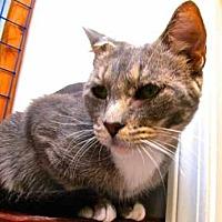 Adopt A Pet :: Mia - Davis, CA