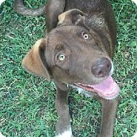 Adopt A Pet :: Puppy Lucky - Austin, TX