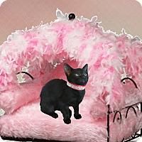 Adopt A Pet :: Raven - Sugar Land, TX