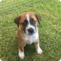 Adopt A Pet :: Rummy - Pompano beach, FL