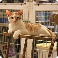 Adopt A Pet :: Manny - Carlisle, PA