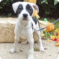 Adopt A Pet :: Silva - West Chicago, IL