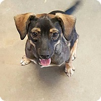 Adopt A Pet :: Lincoln - Barnesville, GA