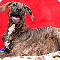 Adopt A Pet :: Athena - Okeechobee, FL