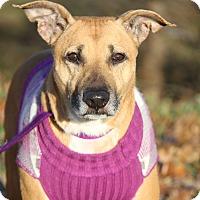 Adopt A Pet :: Precious (Spayed) - New Photos - Marietta, OH