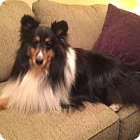 Adopt A Pet :: McClain - Mission, KS