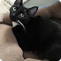 Adopt A Pet :: Sheila E - Yorba Linda, CA