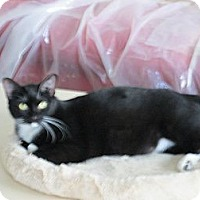 Adopt A Pet :: Juliet - Jeffersonville, IN