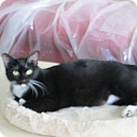 Adopt A Pet :: Juliet - Jeffersonville, IN