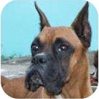 Adopt A Pet :: Don Juan - Sunderland, MA