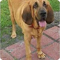 Adopt A Pet :: Pluto - Carrollton, GA