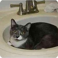 Adopt A Pet :: Wiskers - Reston, VA