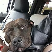 Adopt A Pet :: Dozier - Brattleboro, VT