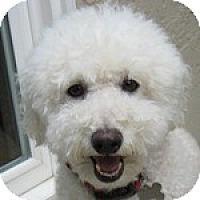 Adopt A Pet :: Nico - La Costa, CA