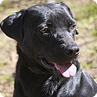 Adopt A Pet :: Callie - Tallahassee, FL