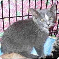 Adopt A Pet :: Kiss - Colmar, PA