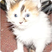 Adopt A Pet :: Lucy - Xenia, OH