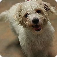 Adopt A Pet :: Wonder - Canoga Park, CA