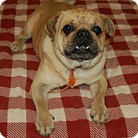 Adopt A Pet :: Peppy - Hazard, KY