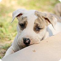Adopt A Pet :: Brady - Mission Viejo, CA