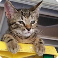 Adopt A Pet :: Pancetta - Royal Palm Beach, FL
