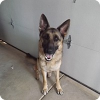 Adopt A Pet :: Andy - Quincy, IN