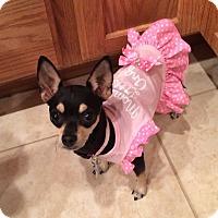 Adopt A Pet :: Windy - Las Vegas, NV