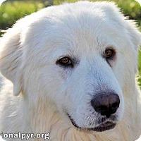Adopt A Pet :: Dexter - adopted - Beacon, NY