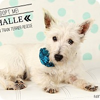 Adopt A Pet :: Halle-Pending Adoption - Omaha, NE