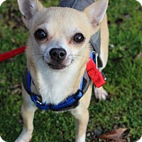 Adopt A Pet :: Buster - Grants Pass, OR