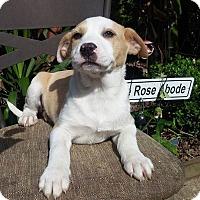Adopt A Pet :: Ciela - Houston, TX